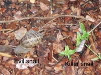 Snailcompare